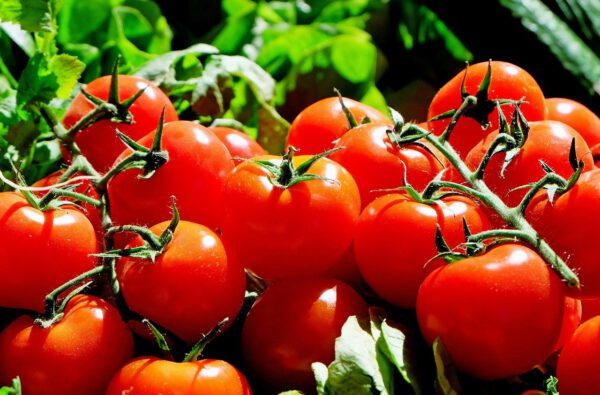 cocktail-tomaten